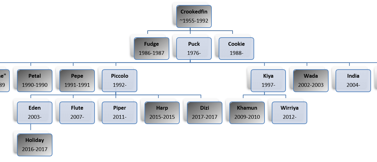 Crookedfin Lineage